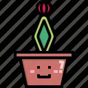 cacti, cactus, desert, gymnocalycium, nature, pot, summer