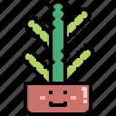 cacti, cactus, desert, euphorbia, nature, pot, summer