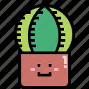 cacti, cactus, desert, nature, pot, summer