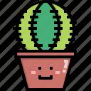 cacti, cactus, desert, nature, pot, summer, tree