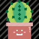 cacti, cactus, desert, gymnocalycium, nature, pot, summer icon