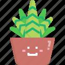 cacti, cactus, desert, haworthia, nature, pot, summer icon