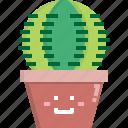 cacti, cactus, desert, nature, pot, summer, tree icon