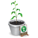 green, plant, seedling, tree icon