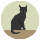 animal, cat, halloween, pet, sitting icon