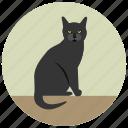 animal, cat, halloween, pet, sitting