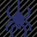 arachnid, bug, halloween spider, insect, spider icon
