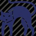 animal, cat, evil cat, feline cat, halloween cat icon