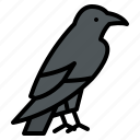 bird, halloween, horror, raven