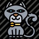 animal, cat, feline, pet, sitting