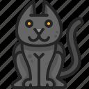 cute, pet, cat, mammal, cartoon, animal, black