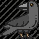 bird, zoo, crow, raven, animal, nature, black