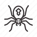 deadly, halloween, spider icon