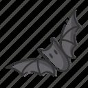 animal, bat, halloween, spooky