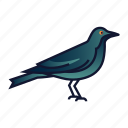 bird, corvus, crow, death, halloween, horror, raven icon