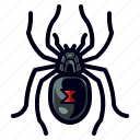 black widow, bug, halloween, insect, spider, widow icon