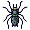 bug, halloween, insect, spider, tarantula icon