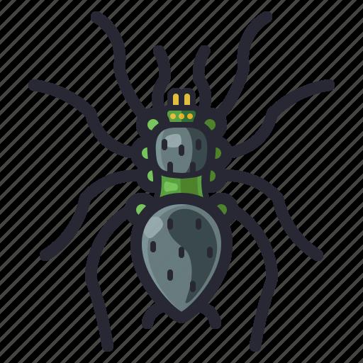 bug, halloween, insect, spider, tarantula icon