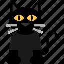 animal, cat, kitty icon icon