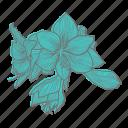 amaryllis, floral, flower, plant, wellness icon