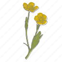 buttercup, floral, flower, plant, wellness icon