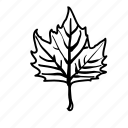 botanical, leaf, leaves, nature, sycamore icon