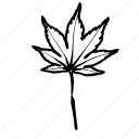 botanical, japanese maple, leaf, leaves, nature icon