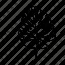 botanical, leaves, leaf, nature, monstera