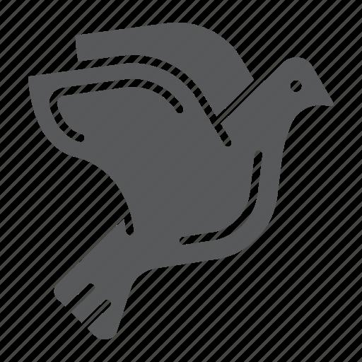 animal, bird, dove, freedom, love, pigeon icon
