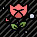 flower, romance, rose icon