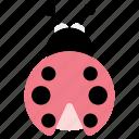 ladybird, insect, bug icon