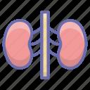 kidney, nephron, renal artery, urinary bladder, urinary tract icon