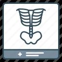 bones, medical, radiology, radioscopy, skeleton, xray icon