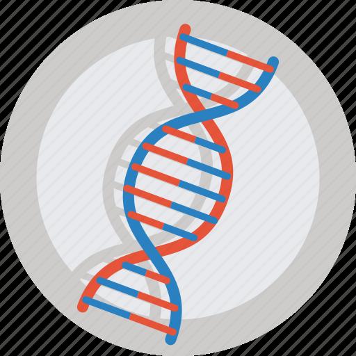 dna, gene, health, molecule, research, science icon