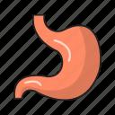 body, digestive, medical, organ, stomach