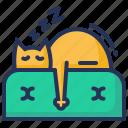 cat, dreaming, pillow, sleeper