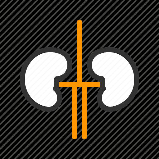 Care, health, kidneys, medical icon - Download on Iconfinder