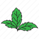 cooking, food, healthy, herb, leaves, mint, plant icon
