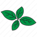 basil, food, green, healthy, herb, mint, salad icon
