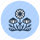 chamomile, flower, herb, medicinal, plant icon