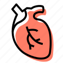heart, organ, medicine, cardiology