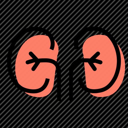 Kidneys, organ, medicine, urine icon - Download on Iconfinder