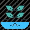 gardening, hydroponic, hydroponic gardening, water