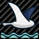 animal, beach, bird, fly, sea
