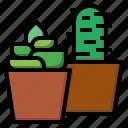 botanical, cactus, dessert, dry, nature, plant