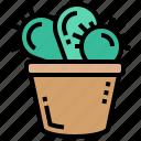 botany, cactus, plant, pot, succulent