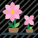 botanic, flower, nature, plant, pot icon