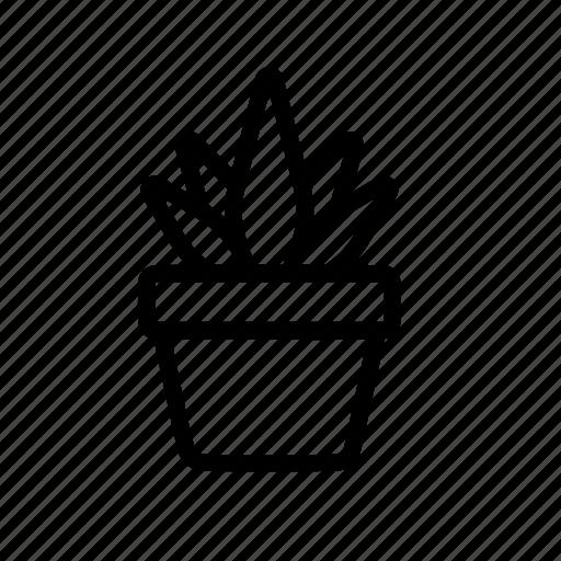 flora, pot, succulent, vas icon