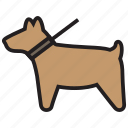 animal, dog, pet, walk icon