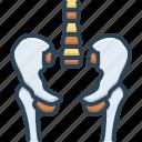 bone, femur, hip, human, joint, pelvis, skeleton